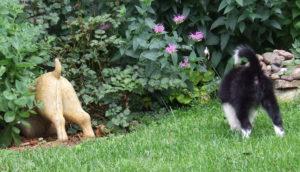 puppy butt mirrors dog statue